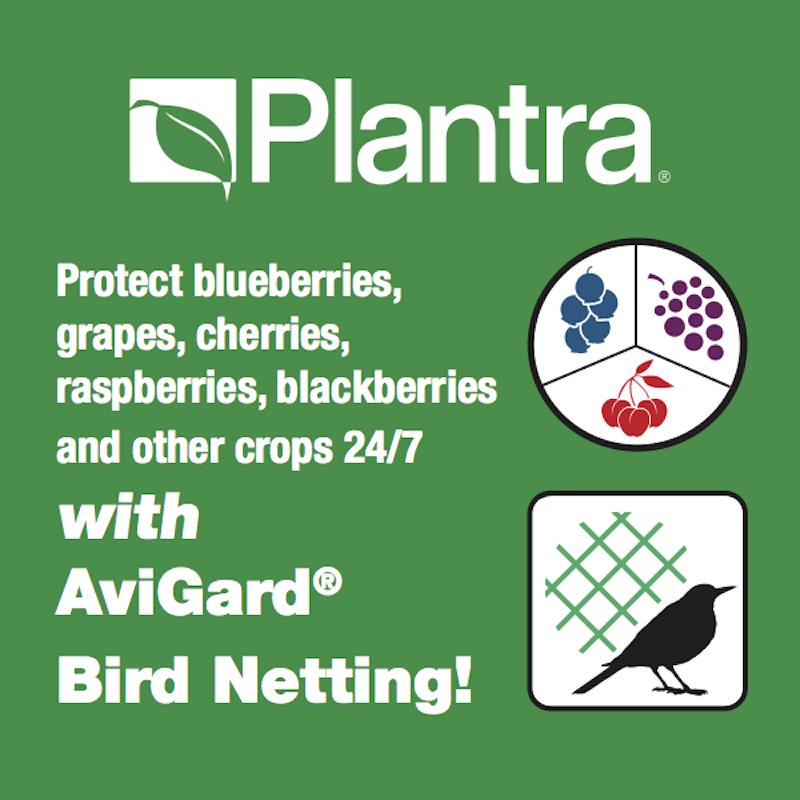 plantra-4x4-web.jpg